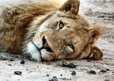 Ol-Bobongi-Wildlife